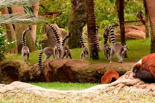 Disfruta de un día en familia en el Bioparc de Fuengirola ¡Diviértete y aprende conociendo más de 200 especies animales!