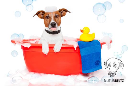 Sesión completa de baño para perros de diferentes tamaños
