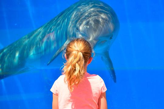 Descubre las maravillas del fondo del mar con una entrada de día al Aquarium de Barcelona ¡Sumérgete en la diversión!