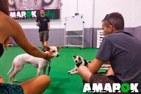 Club de rescate, club de discriminación olfativa o modificación de conductas en Amarok Educación Canina ¡Y a disfrutar con tu perro!