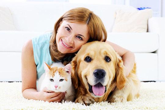 Elimina el exceso de sarro y placa de la boca de tu mascota en la Clínica Veterinaria Arandilla ¡Devuelve a los dientes el aspecto sano que debe tener!