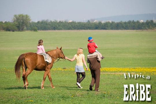 Tus hijos disfrutarán de una increíble experiencia en un paseo libre de 60 minutos en pony e interacción con los animales ¡Desarrolla su amor por todos los seres vivos!