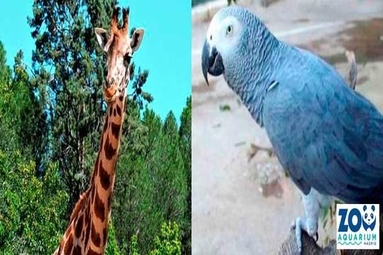 Entrada para el Zoo Aquarium de Madrid ¡Para adulto o niño!