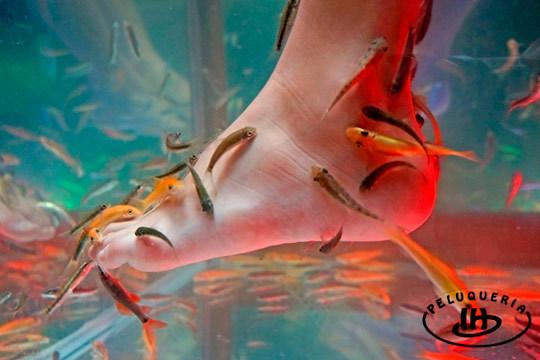 En Israel Hurtado tus pies quedarán como nuevos  con una sesión de limpieza podal y una inmersión Fish Spa con peces Garra Rufa ¡Pruébalo!