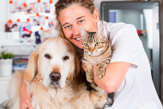 Cuida a tus mascotas y ponlos en manos de los mejores profesionales de la Clínica Veterinaria Arandilla ¡Castración para perro o gato al mejor precio!