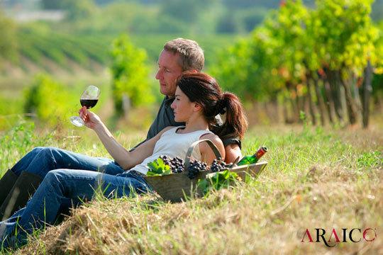 Disfruta de un plan diferente visitando las magníficas Bodegas Araico ¡La visita incluye una botella de vino, una cata con picoteo y un interesante recorrido por las dos bodegas Araico!