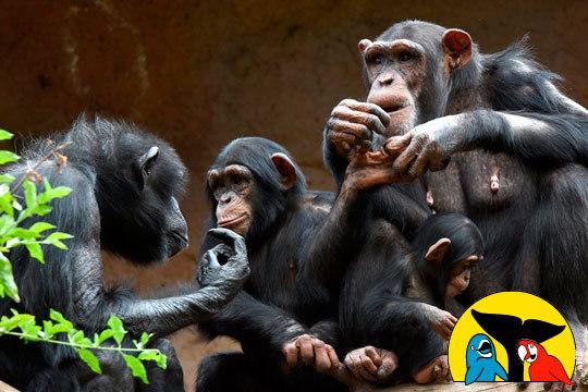 Disfruta de un día en familia o con amigos en el Loro Parque de Tenerife ¡La mejor manera de descubrir el mundo animal!