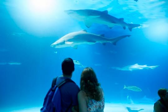 ¡Visita el mayor parque marino de Europa! Entrada para Oeanografic dentro del complejo de la Ciutat de les Arts i les Ciències