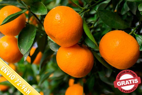 ¡Naranjas y mandarinas de Valencia! Elige entre 10,15, 20 o 30 kg de naranjas y mandarinas y recíbelas cómodamente donde eligas